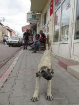 turchia 2015 028
